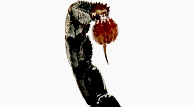 scorpionul portret astrologic