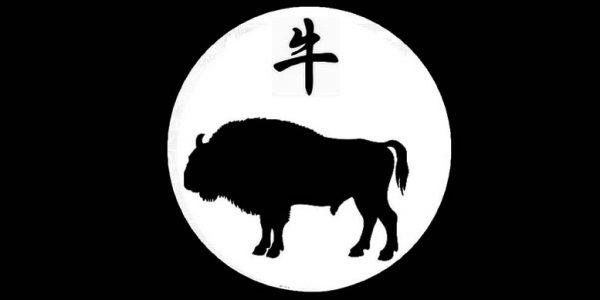 bivol zodiac chinezesc
