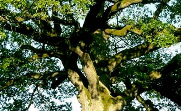 copacul implinirii tuturor dorintelor