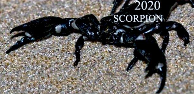 horoscop scorpion 2020