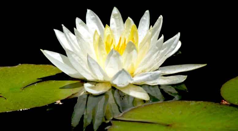 iluminatul dialog zen