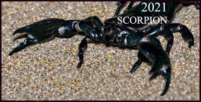 horoscop scorpion 2021